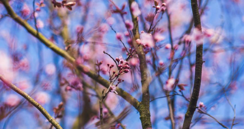 Spring in Victoria